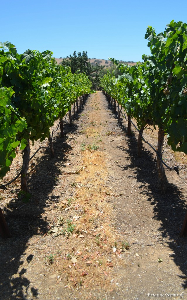 The vineyard at Les Chenes.