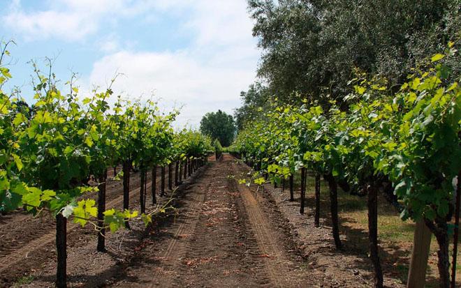 Vincent Arroyo Winery, Calistoga