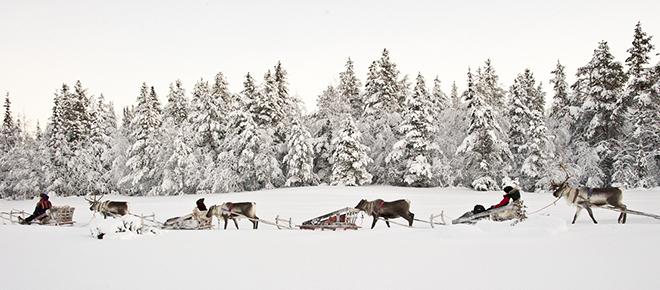Kakslauttanen_Arctic_resort_Reindeer_Sledding