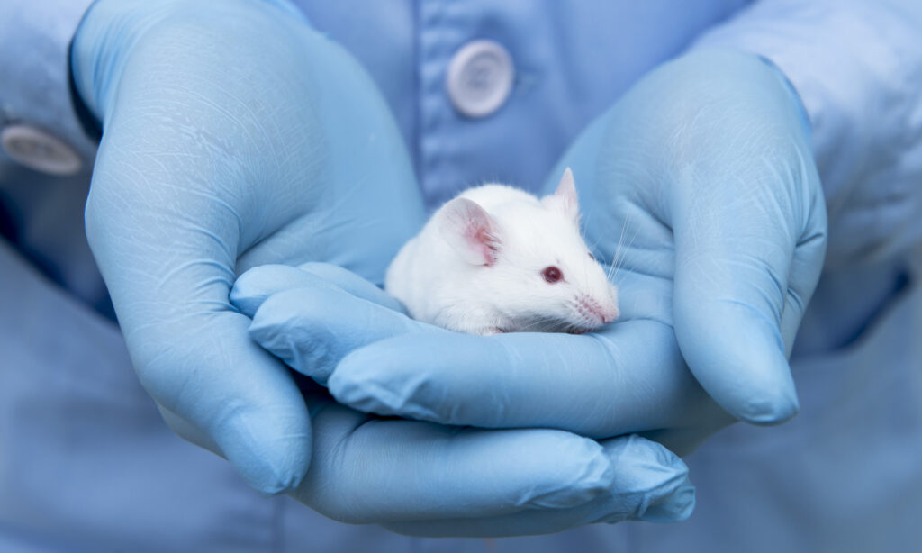 animal testing, cruelty-free, cruelty-free, rat, mouse